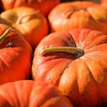 Bienvenido otoño / Welcome autumn