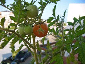 Mi huerto en Julio / My orchard in July