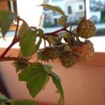 Mi Huerto en Octubre – My Orchard in October
