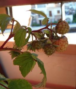 Mi Huerto en Octubre - My Orchard in October