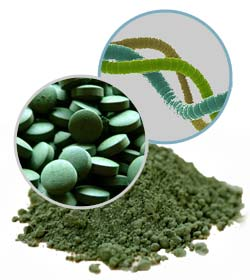 20 datos sobre la Espirulina - 20 facts about Spirulina